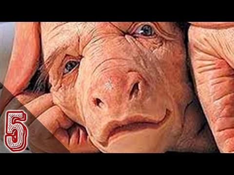 Animali nati con volti umani