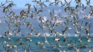 gli uccelli (franco battiato) by v,mesiano hd 1080p