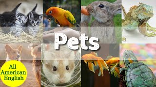 Pets in English | Learn English Words for Pet Animals | English Vocabulary | All American English