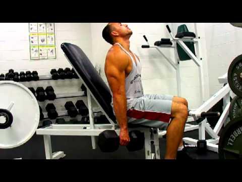 Seated Dumbbell Shoulder Shrugs