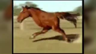 "Retarded running ""spicy"" horse (upgraded version)"