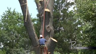 Time lapse Oak tree removal with our 60 ton crane