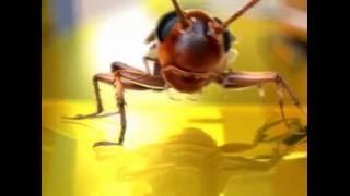 Опыт с тараканом. Как избавиться от тараканов?