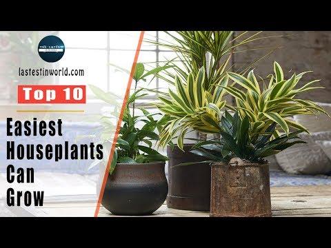 Top 10 Easiest Houseplants You Can Grow