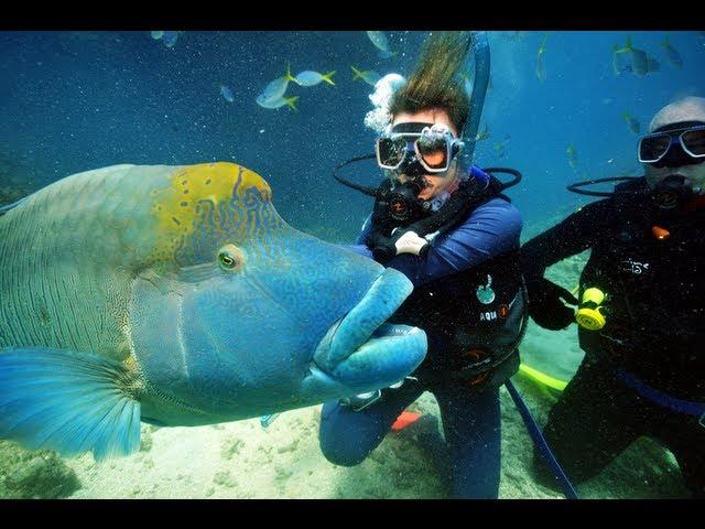 FINDING NEMO // The Great Barrier Reef, Australia