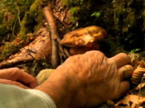 Come guarire un fungo mikozan