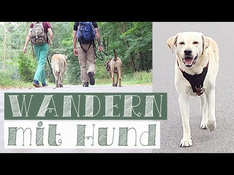 20km WANDERN mit Hund | Hunde Vlog | Alltag mit Hund
