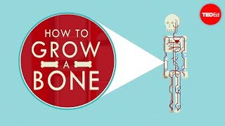 How to grow a bone – Nina Tandon