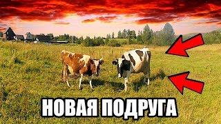 Соседи жалуются на КОРОВУ! Жизнь в деревне