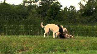 Canine Country Quarters | Country Dog Boarding NYC