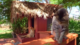 The Lana'i Cat Sanctuary Is a Hawaiian Paradise