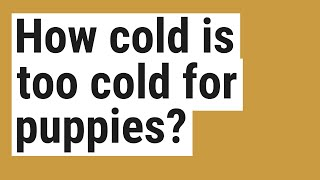 How cold is too cold for puppies?