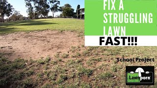 How to Fix a Struggling Lawn. FAST!!!