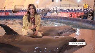 Новости UTV. Шоу дельфинов теперь и в Стерлитамаке!