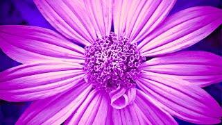 Raise Positive Vibration | 528Hz Love Frequency Music | Enhance Self Love | Detox Frequency Healing