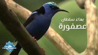 تحميل اغاني Bahaa Sultan - 3asfora (Music Video) | (بهاء سلطان - عصفورة (فيديو كليب MP3