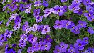 Цветы улыбка природы