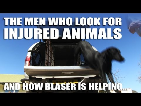 The Men Who Look For Injured Animals