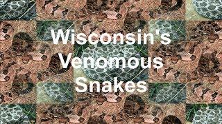 Wisconsin's Venomous Snakes
