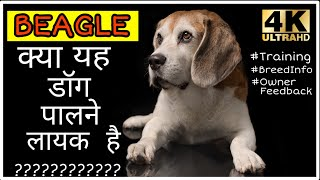 Dog Breeds- Beagle Dog Facts And Training || Is It Ok To Adopt Beagle Puppy ??