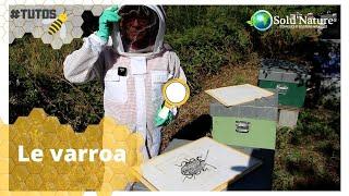 Comment identifier et contrôler le varroa ?