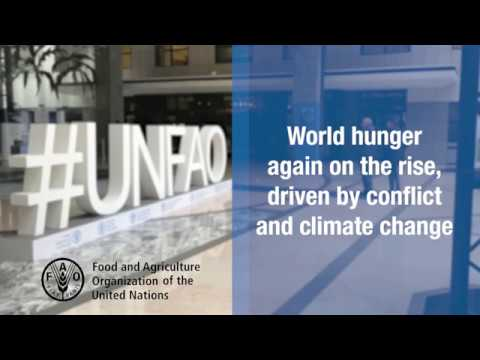 New UN report: World hunger again on the rise, driven by conflict and climate change