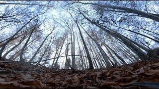 Autumn morning - FPV Freestyle