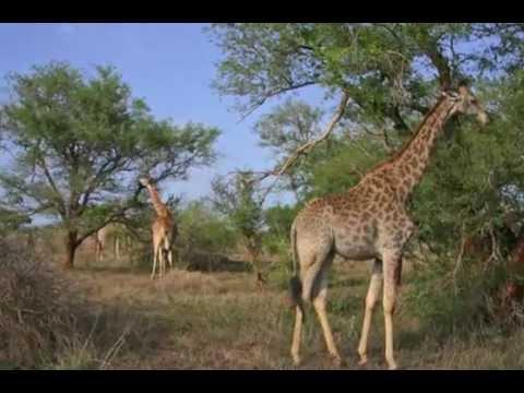 Marloth & Kruger Park