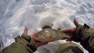 Река весляна коми отчеты рыбалка 2020