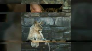 Ксюша Cat