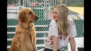 高分泪目电影,赛车手养了一条狗,十年间不离不弃忠诚无比,有时候人不如狗