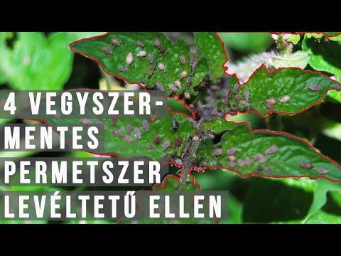 Allergiás rhinitis orrspray