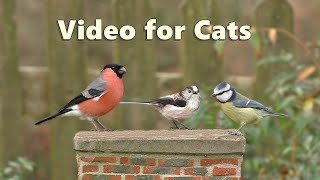 Videos for Cats : Garden Birds Spectacular - NEW 8 Hours