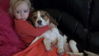 Cute Dogs Comfort a Sick Child While Watching a Movie | Baby Laura, Charlie the dog and Puppy Ollie