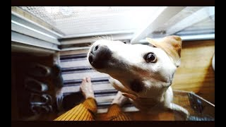 You Won't Believe What Our Dog Dug Up | MATT AND BLUE