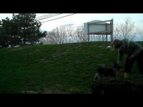 Dog Trick Training: Back Stall Step 2