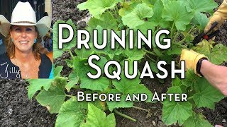 Pruning Squash Before and After