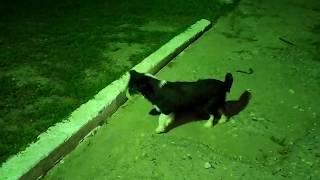 Собака Бабка, ёж и Муська