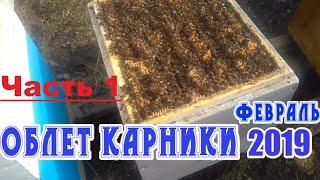 ОБЛЕТ ПЧЕЛ КАРНИКА / ФЕВРАЛЬ 2019