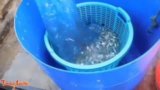 Đi Câu Cá Biển, Xem đánh Bắt Cá Cơm   P1   Fishing