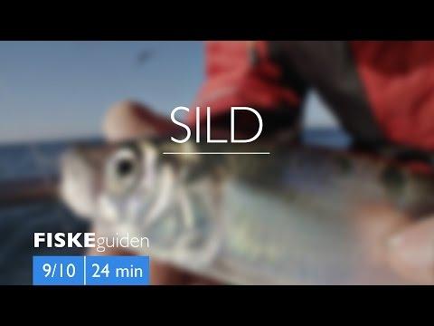 Sildefiskeri med Gordon P. Henriksen