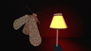 The Moth And The Lamp (very Sad Story) But It's Roblox