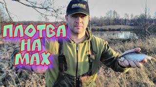 Ловля плотвы весной на фидер в белоруссии