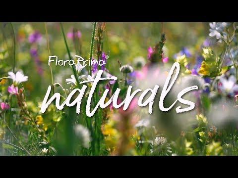 Blumen in der Vase wie ein Profi arrangieren mit FloraPrima naturals