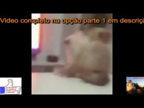 O gato piracento