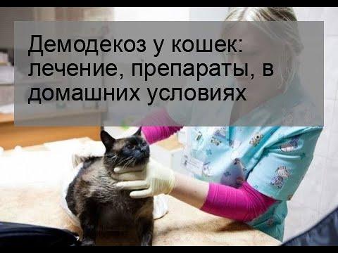 Демодекоз у кошек: лечение, препараты, в домашних условиях