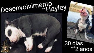 Crescimento Da American Staffordshire Terrier 30 Dias Até 2 Anos