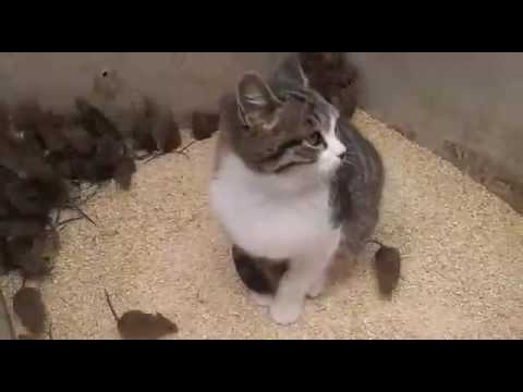 Кот который видел все - его уже не удивить