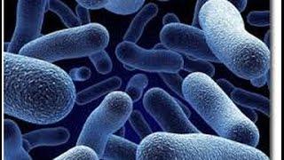Cómo Utilizar Bacterias en cultivos Ecológicos - TvAgro por Juan Gonzalo Angel
