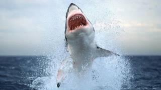 Нападение акулы. Приморский край 2011
